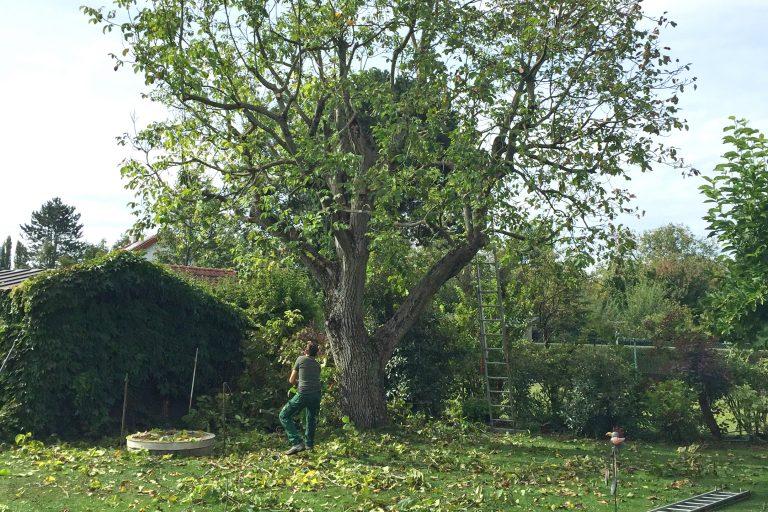 Baumschnitt und Gartenpflege