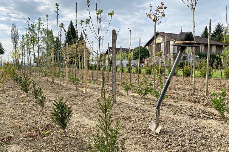 Bäume graben in der Baumschule Huber