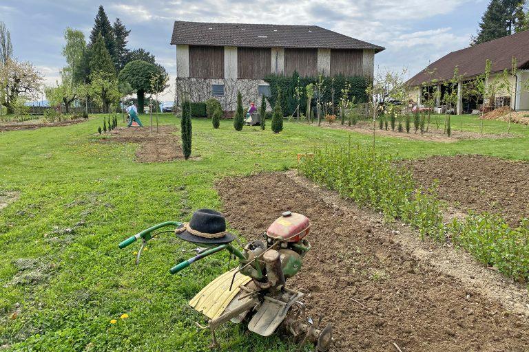 Arbeiten und Pflege in der Baumschule