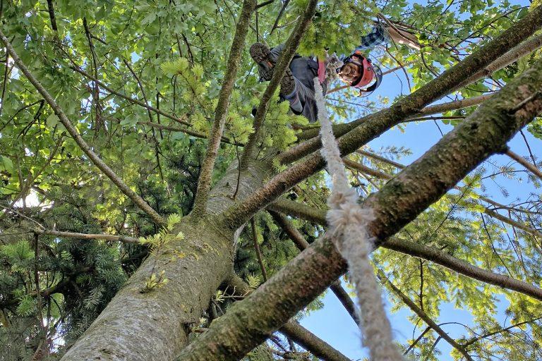 Baumpflege und Baumschnitt