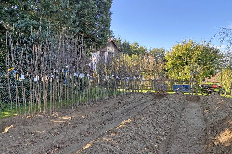 Obstbaumeinschlag in der Baumschule