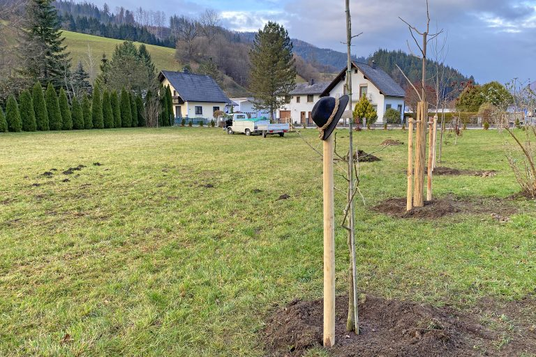 Baumpflanzung im Garten